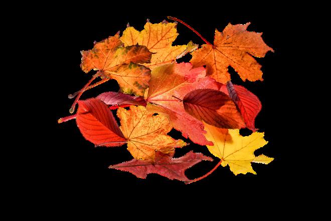 autumn-1768354_960_720